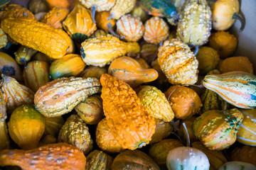 Bin of fall autumn gourds
