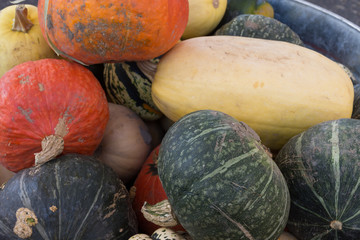 Close up of freshly picked winter squash, spaghetti squash and pumpkins. Some still have soil on them. Photographed in natural light.