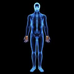 3D illustration of Hand Skeleton - Part of Human Skeleton.