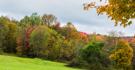 a landscape trees with bright autumn fall foliage colors