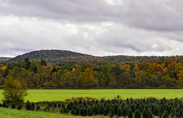 a landscape of  trees with bright autumn fall foliage colors  and green grass