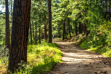 Trail on Mt Lemmon