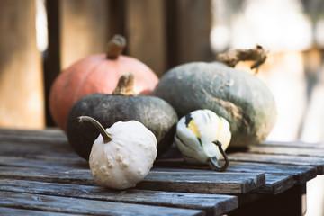 Pumpkins, gourds, squashes. Selective focus, copy space, toned image