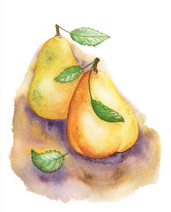 Pears. Watercolor illustration.