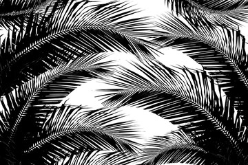 illustration with tree silhouette coconut leaves on white background. - Tropical Asia.