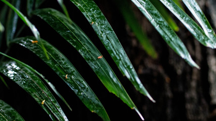 Tropical leaves with raindrops and no smoking sign