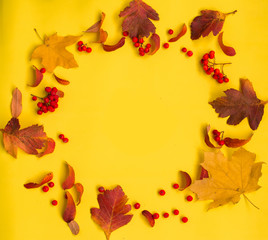 Wall Mural - Autumn composition of leaves and ashberry,Flat lay.Top view