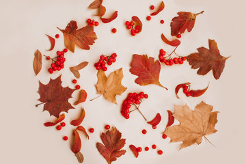 Fototapete - Autumn composition of leaves and ashberry,Flat lay.Top view
