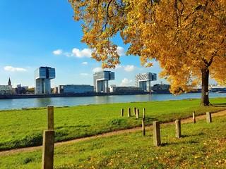 Kölner Kranhäuser im Herbst hinter den Poller Wiesen und dem Rhein
