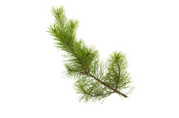 Fir tree branches isolated on white background. Christmas pine tree branches decoration.