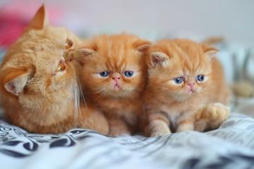 cat,red, kitten, little, mother,