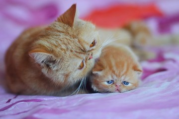 cat,red, kitten,