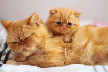 cat,red,