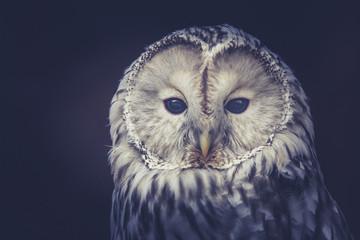 Foto auf Acrylglas Eulen cartoon Owl