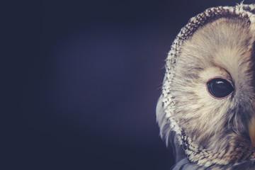 Owl Fototapete