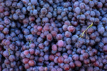 Piles of delicious fresh juicy seedless red grapes background in local city fruit market