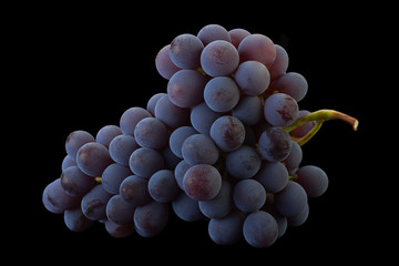 Canadian Lydia grapes on black Fototapete