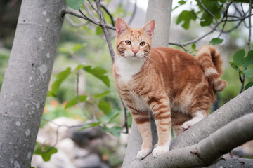 Cute ginger kitten perched in a tree