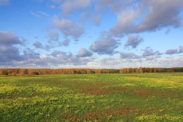 Autumn landscape. Rape field and forest