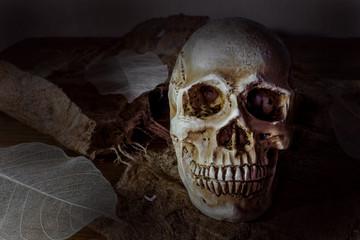 Still life photography human skulls in dark vintage tone