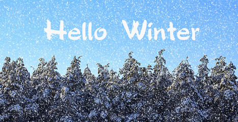 Lovely Hello Winter.Winter Forest Covered With Snow.Snowy Pine Trees In Winter  Forest. Great Ideas