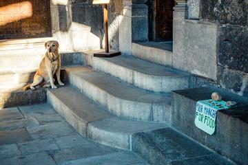 Entrée interdite pour les chiens dans la cathédrale Notre-Dame-du-Puy