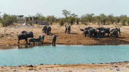 A Family of Elephants Drinking at their Water Source