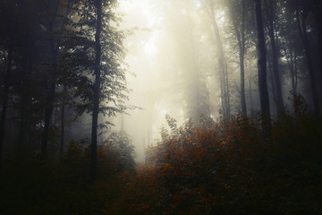 fantasy forest with trees in fog