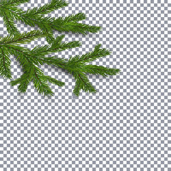 Symbol of the New Year and Christmas. two green lush branches spruce on a checker background. illustration