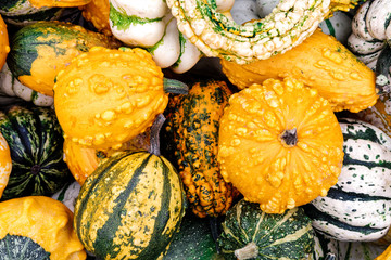 Background of different decorative small pumpkins from above.