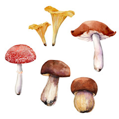 Mushrooms. Watercolor clipart. Each element is isolated on a white background
