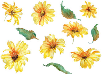 Collection of hand drawn watwrcolor Summer flowers chamomile botany style