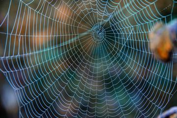 Tautropfen auf Spinnennetz