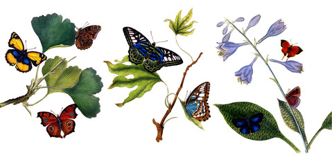 Illustration of butterflies and plants.