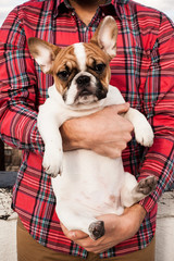 A french bulldog being held by a man wearing a plaid shirt