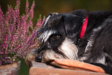 Cute dog resting in garden