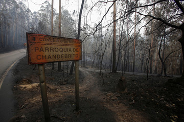 Burned trees and a burned sign are seen after a forest fire in Chandebrito