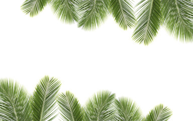 Coconut leaves on isolated background.