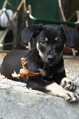 Beautiful puppy dog holds a leaf in her mouth and looks at the camera with curious eye
