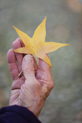 Detail of woman hand holding a yellow star shaped fallen leaf