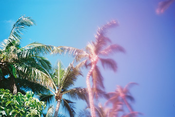 palm trees with pink to blue gradient in sky