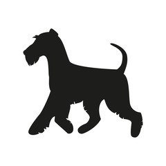 Silhouette of the terrier on the white background.