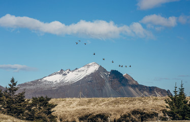 Flying geese over mountain in Iceland