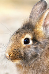 cute portrait of a rabbit