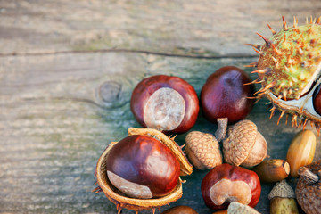 Autumn background-hazelnuts and chestnuts