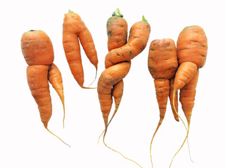 Odd shaped carrots isolated on white