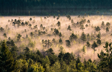 Morning fog and sunrise in Torronsuo National Park, Finland