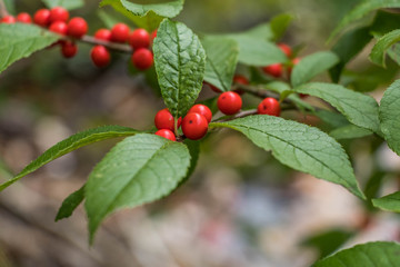 Beautiful fall fruits in the color of Christmas