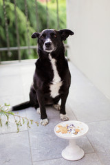 Dog waits in front of cake stand with crackers on it