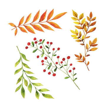 Set of forest autumn branches and leaves isolated on white background. Hand drawn watercolor vector illustration.